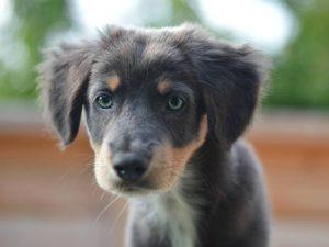 Inquisitive pup