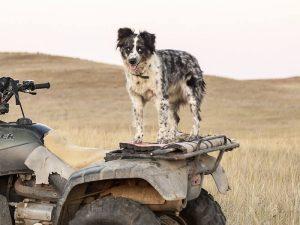 Dog on boundary
